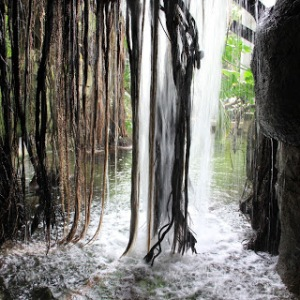 Rainforest waterfall--Moody Gardens