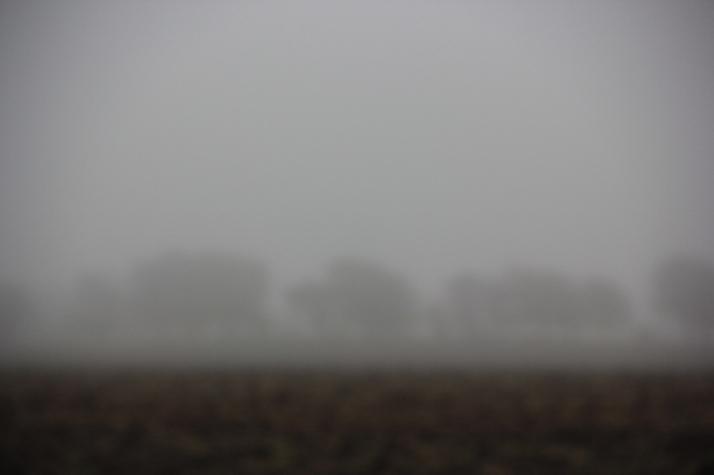 dense fog (800x533)