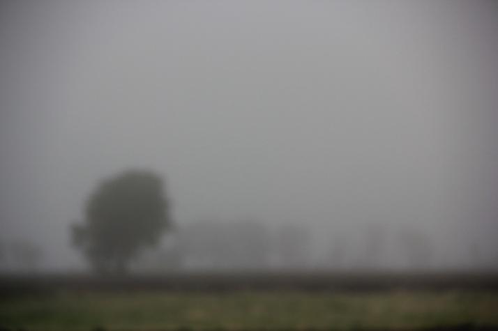 fog (800x533)
