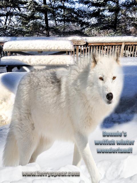 Bonnies wolf deck snow text copy