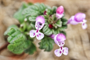 flower weeds 007 (640x427)