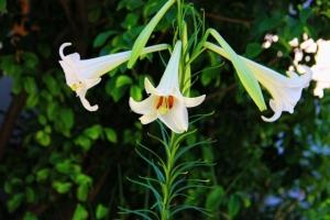 flowers2 (640x427)