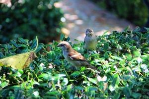 sparrows up close (640x427)
