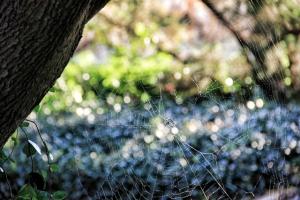 spiderweb (640x427) (2)