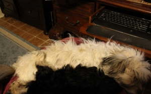This is where they are.--my lap