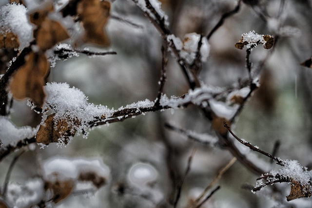 snowon leaves (640x427)