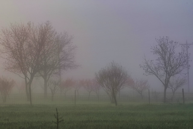 fog and peach orchard pastel (640x427)