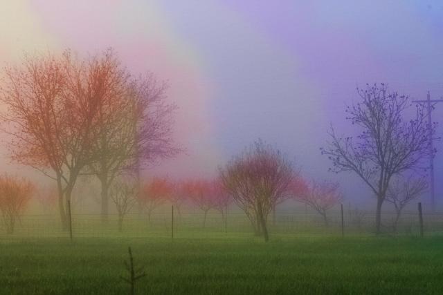 fog and peach orchard rainbow fog  (640x427)