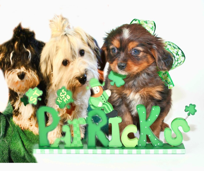 Puppies and St Patrick's Day Wishes!