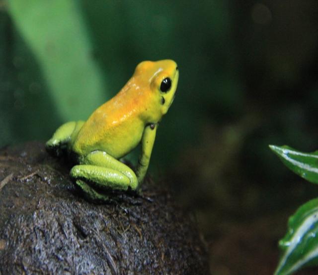 tree frog (640x552)