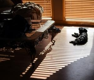 Mishka in the Shadows