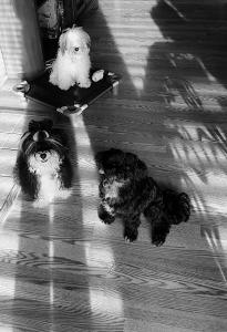 Mishka,, Tanner and Max