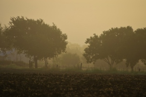 Love Fog