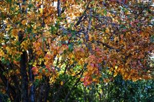 Rilo and fall color 007 (640x427)
