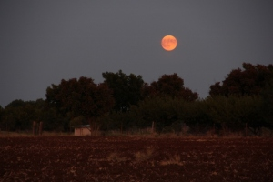Super Moon starting to rise over Texas about 7 pm