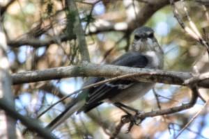 bird 016 (640x427)