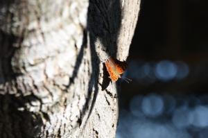 butterflies 030 (800x533)