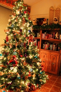 Christmas trees 2012 006 (533x800)