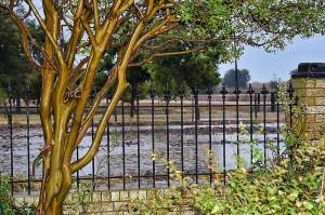 flooded fields 003 (800x533)
