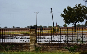 flooded fields 005 (800x533)