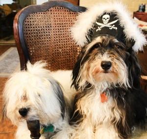 Ahoy Ye Maties!