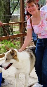 Wolf Dog--escape extraordiinaire