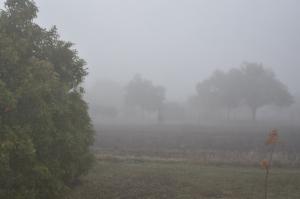 Fog around me