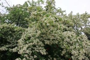 In Bloom--Spring