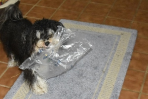 Tanner and the plastic bag 001 (640x429)