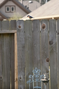 He really, really wanted to go down to the feeder below.