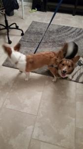 Luna and Rilo, tangled up