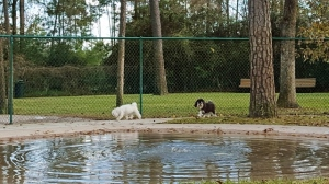 Max and Tanner in the little dog enclosure.
