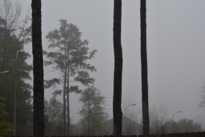 fog front (640x427)