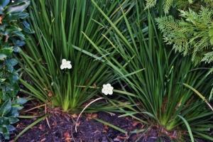 plants neighbors 032 (640x427)