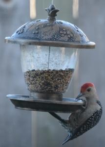 woodpecker 018 (458x640)