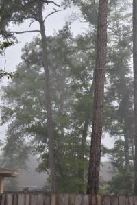 fog 002 (427x640)