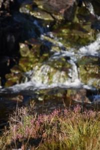 heather creek (427x640) (3)
