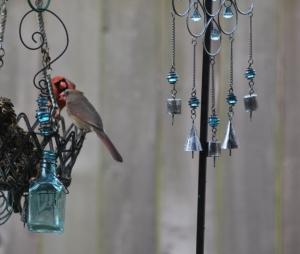 male cardinal feeding female (3) (640x542)