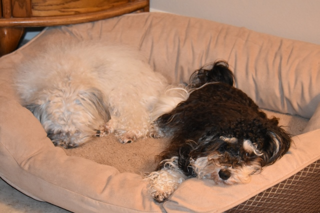 Max and Tanner tired (640x427)