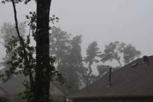 fog 002 (640x427)