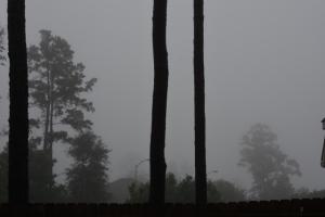 fog 004 (640x427)