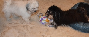 puppies and balloon 032 (640x265) (2)
