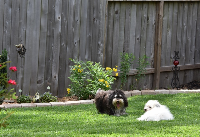 https://terryspear.files.wordpress.com/2016/06/puppies-playing-002-640x441.jpg