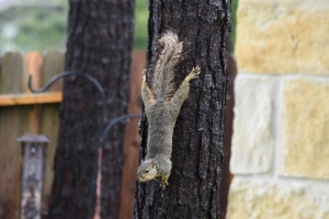 squirrel in rain 640x427)