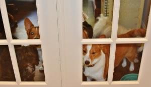 all doggies 001 (1280x745)