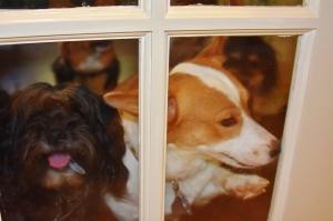 all doggies 004 (1280x853)