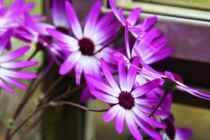close up purple and white flowers (640x427)