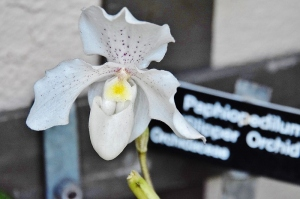 flowers orchid (800x533)