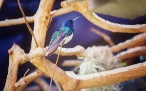 hummingbird vibrant (800x502)