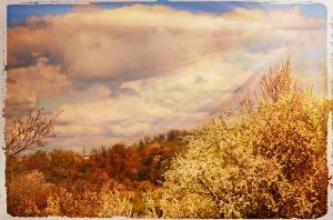 tree image Alex Markovich sun rays, darkened background, vintage